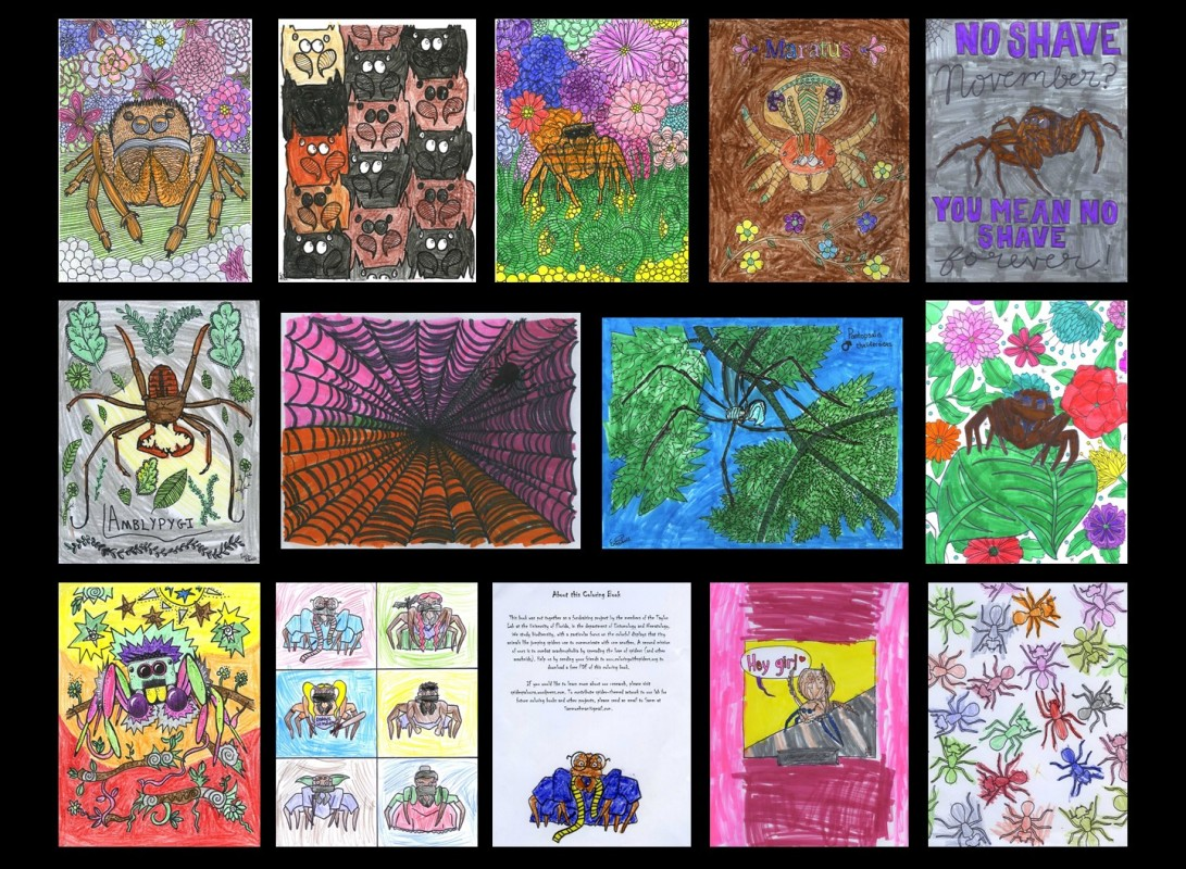 Coloring_with_spiders_BRENTWOOD